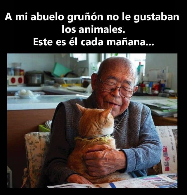 Abuelo da cariños a gato