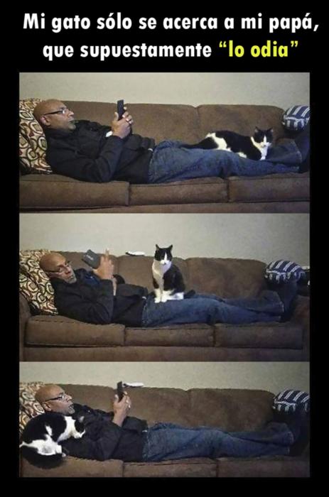 Gato se acerca a señor
