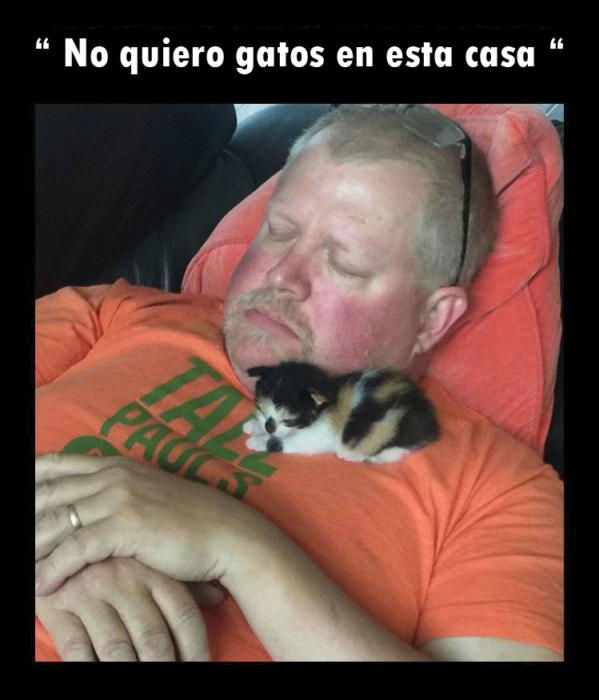 Papá dormido con un gato
