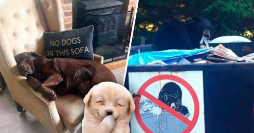 Cover Animales anarquistas a los que no les interesa tus tontas reglas