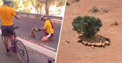 Cover La importancia de los árboles