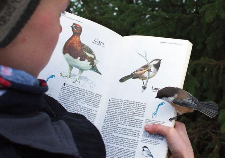 ave leyendo