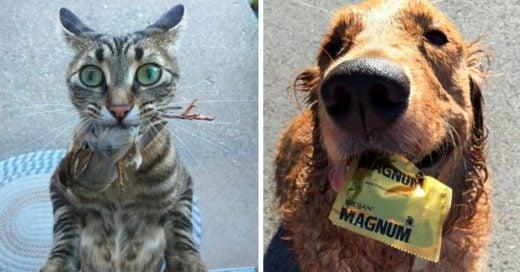 Cover regalos que estos perros y gatos hicieron a sus dueños