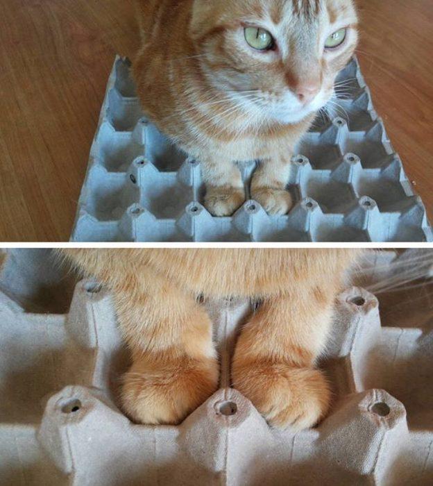 gato patas cartón de huevo