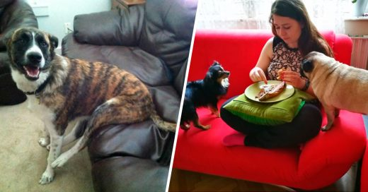 Cover Perros que le dieron otra interpretación a las normas humanas