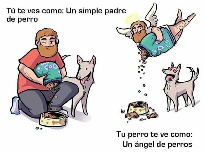 croquetas perro dueño así te ve tu mascota