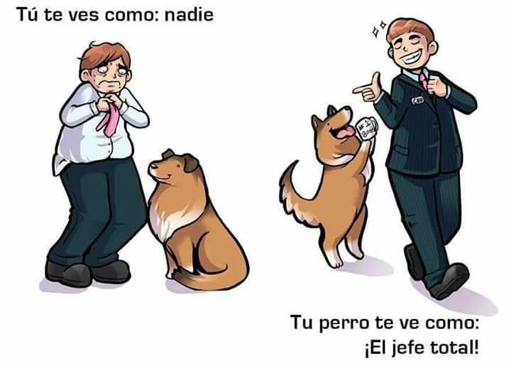 el jefe perro así te ve