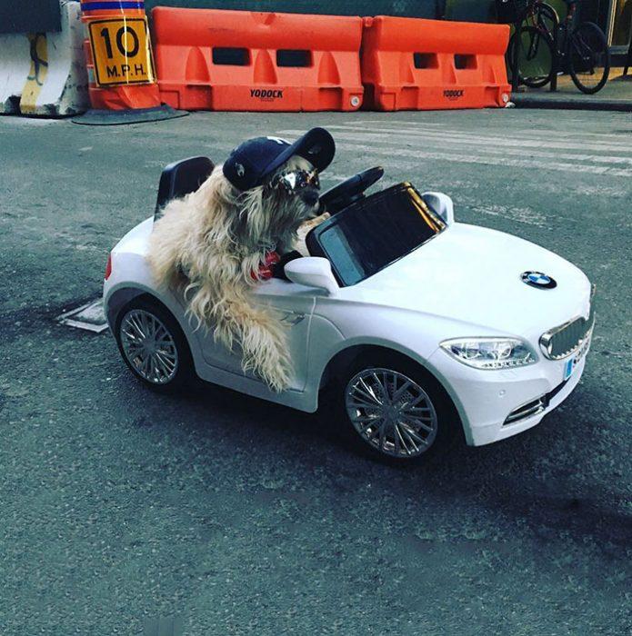 perro auto