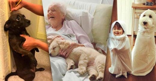 Cover Fotos que te cautivarán si eres amante de los perros