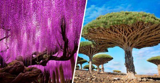 Cover Estos árboles son tan hermosos que pensarías que son de ciencia ficción