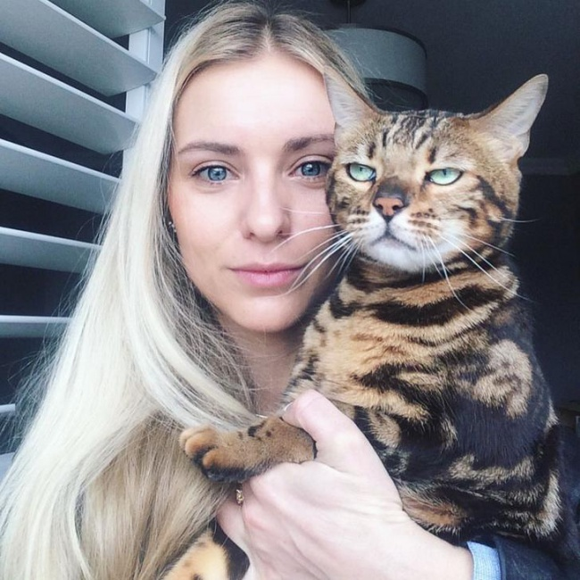 gato selfie