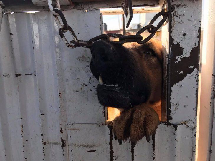 perro rogando rescate