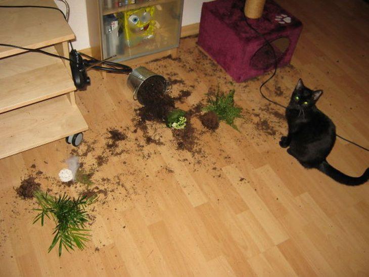fiesta gato