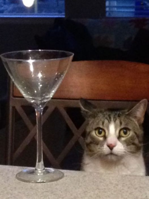 gato tomando