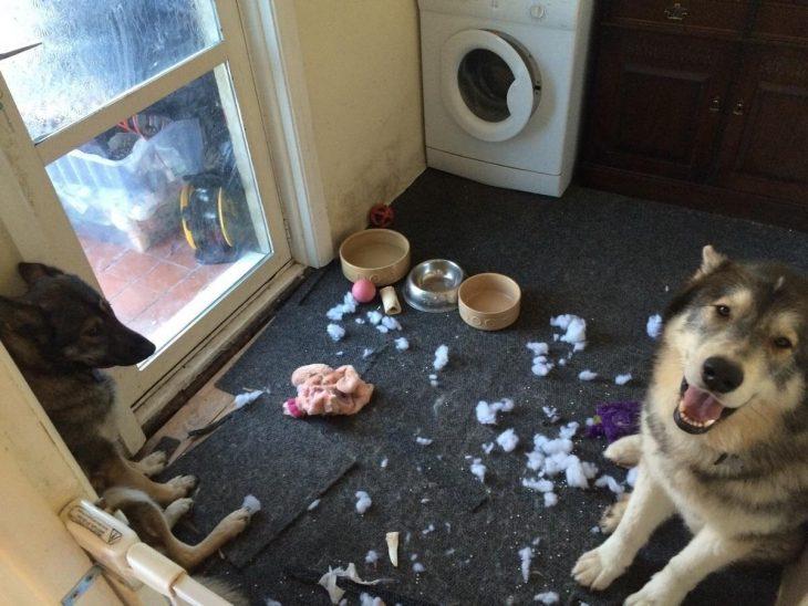 perro desastre
