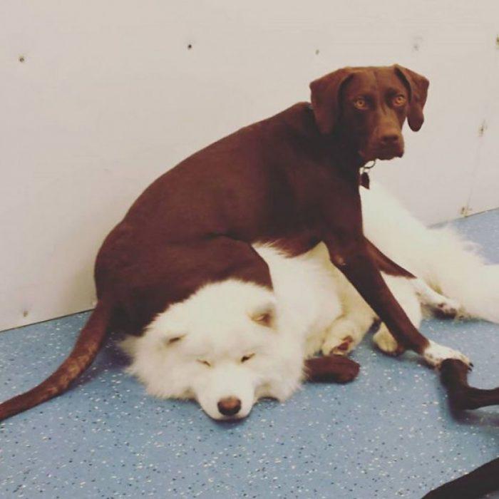 perro sentado sobre alguien