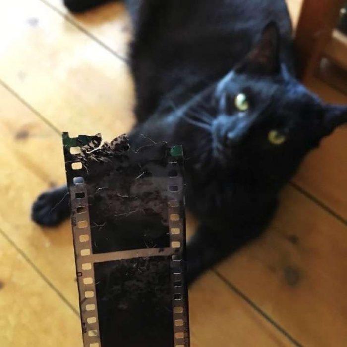 gato película