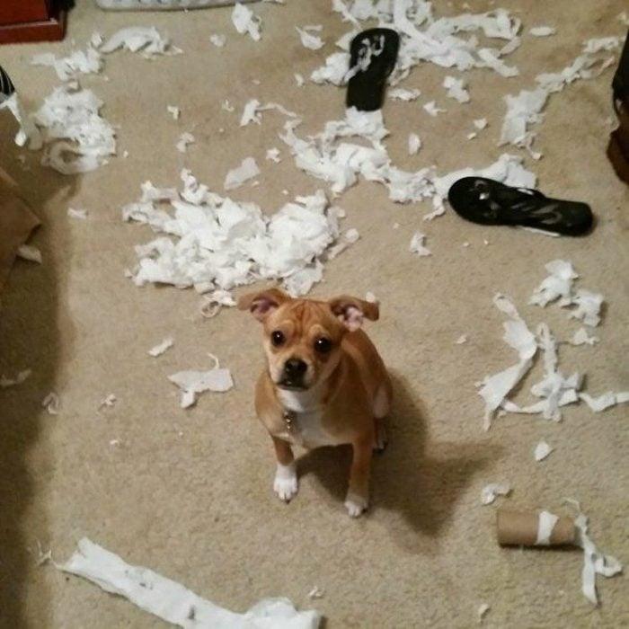 perrito papel de baño