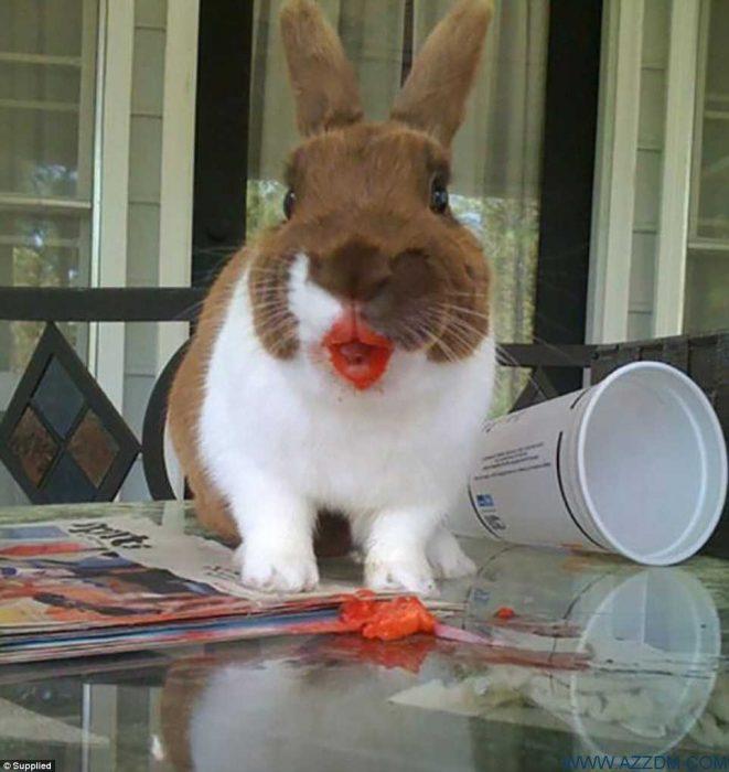 conejo labial