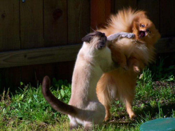 Animales tiernos discutiendo Recreoviral.com