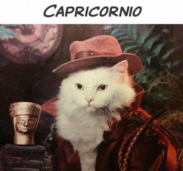 CAPRICORNIO GATO