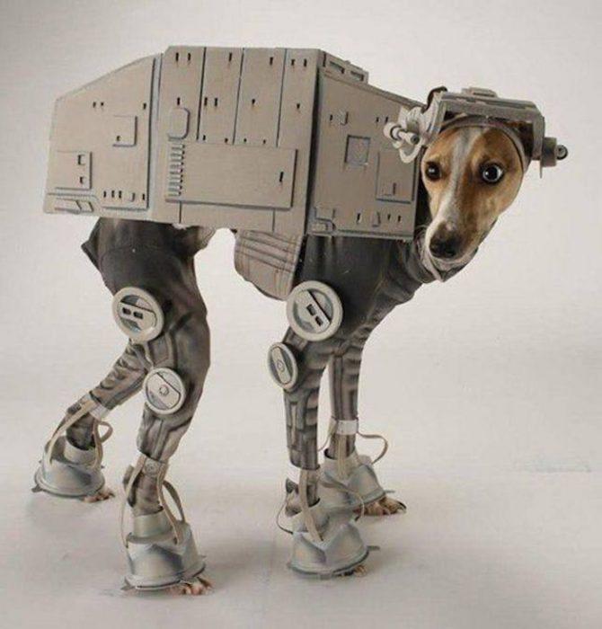 Disfraces para perritos