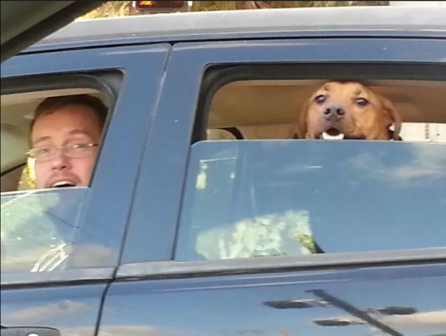 perro y dueño carro