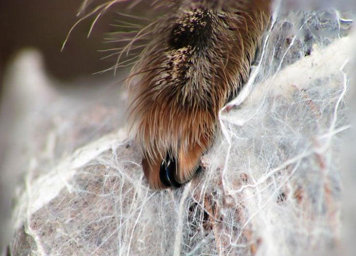 Patitas de araña Recreoviral.com