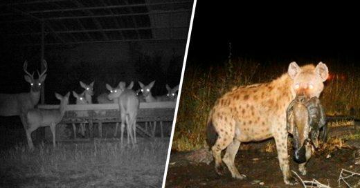 Cover lo que hacen los animales cuando no los vemos