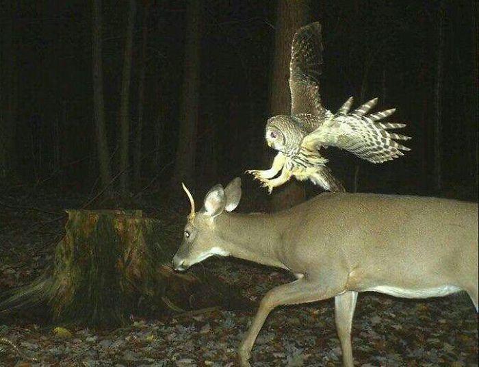 El ataque del búho