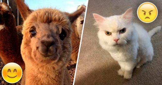 Cover Animales cuyas emociones envidiarían los mejores actores del mundo