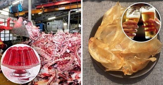 Cover productos que no querrás volver a comer después de saber qué están hechos
