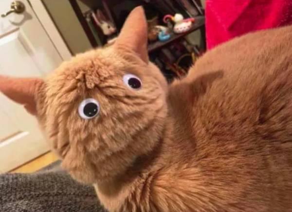 ponle ojitos a la cabeza de tu gato