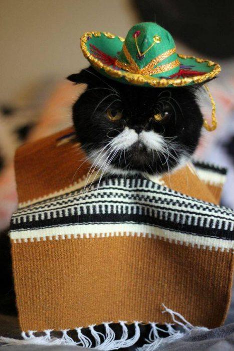 Gato a la mexicana
