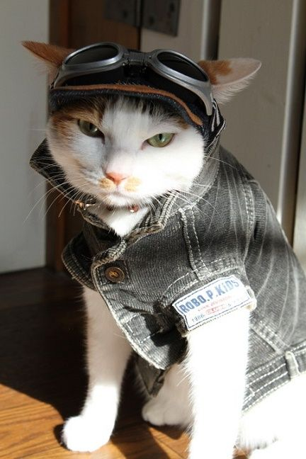 Gato aviador