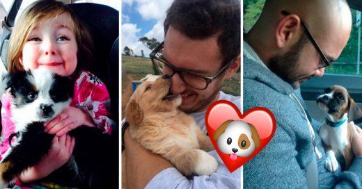 Cover Perritos que conocieron por primera vez a sus adoptantes