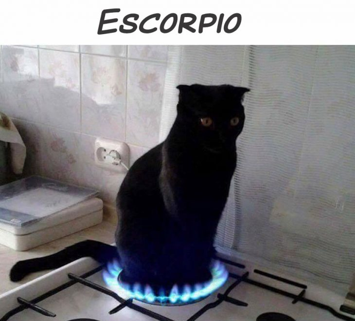ESCORPIÓN GATO