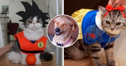 Cover Disfraces de gatitos