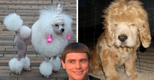 Cover 10 Perros que necesitarán ayuda psicológica por sus cortes de pelo
