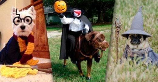 Cover HALLOWEEN ideas para disfrazar a tu perro en Halloween