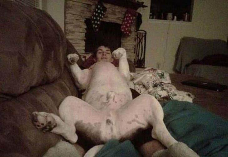¿un perro con cabeza de humano?