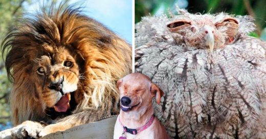 Cover animales que no son para nada fotogénicos