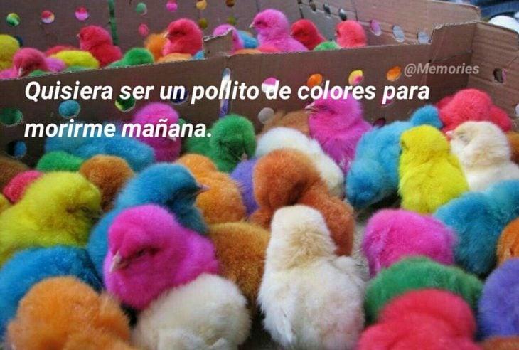 pollito de colores
