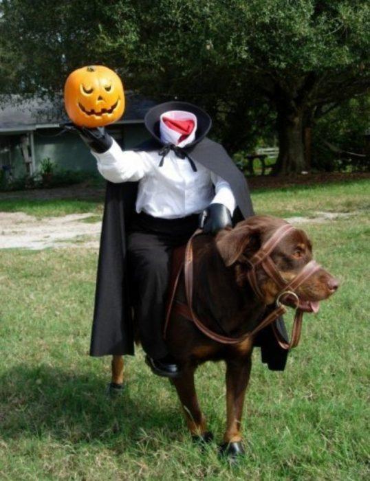 El jinete sin cabeza perro disfraz