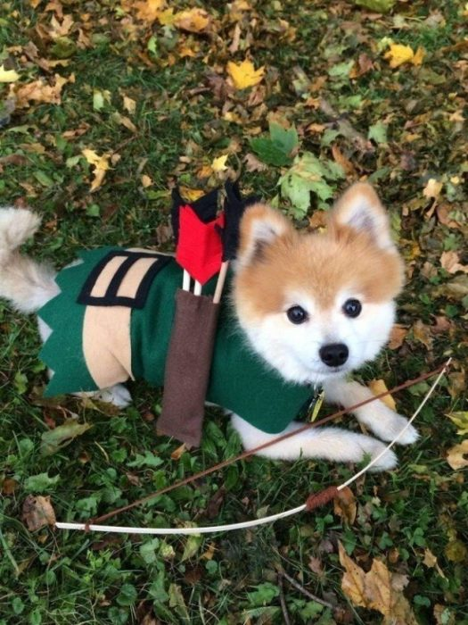 robin hood perro disfraz
