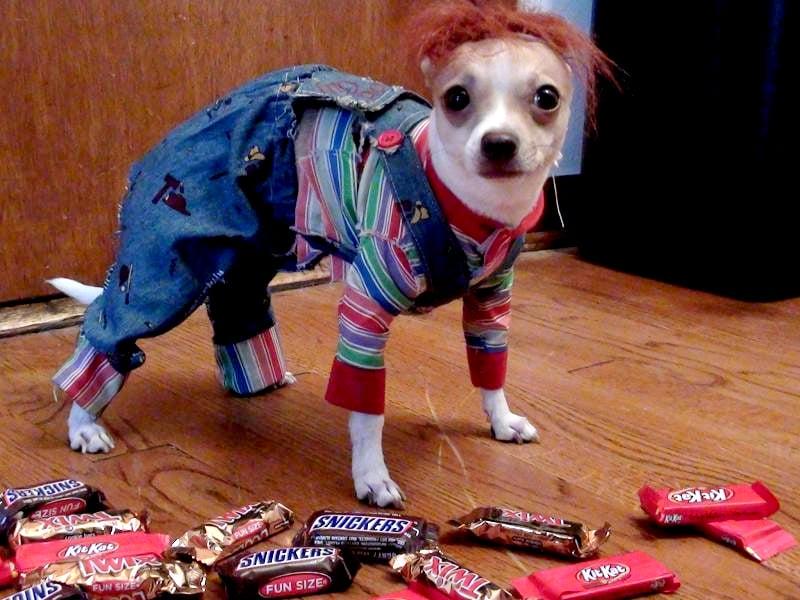 15 Ideas para disfrazar a tu perro el próximo Halloween