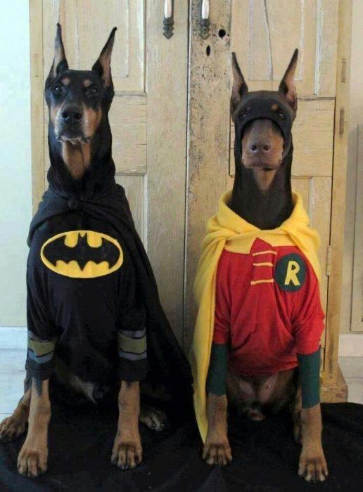 pareja de perros disfrazados halloween
