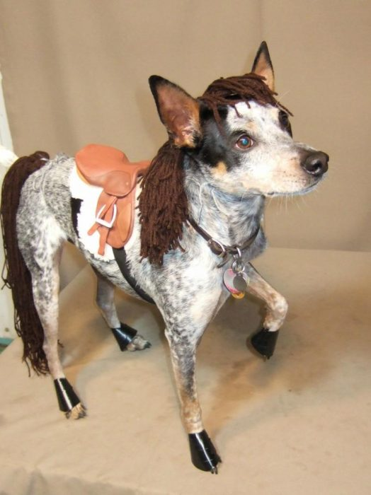 perro disfraz caballo