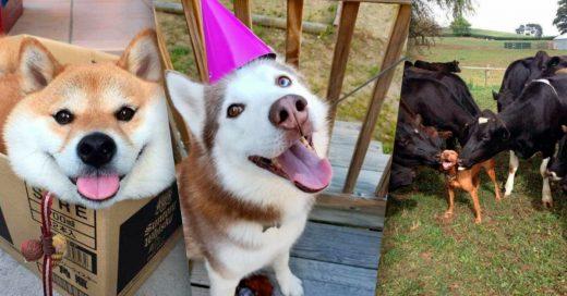 Cover fotos de perritos tan felices que vas a ladrar de ternura