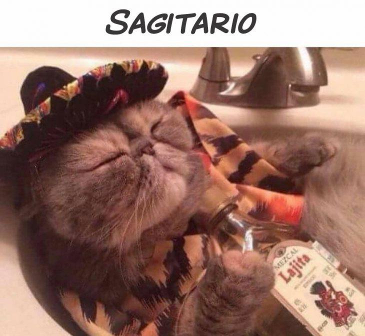 sagitario gato